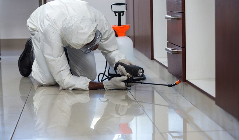 professional pest inspections Sydney inspector.